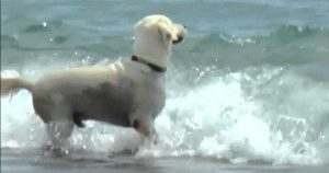 Playa para perros de Torre del Mar - Perro en la playa