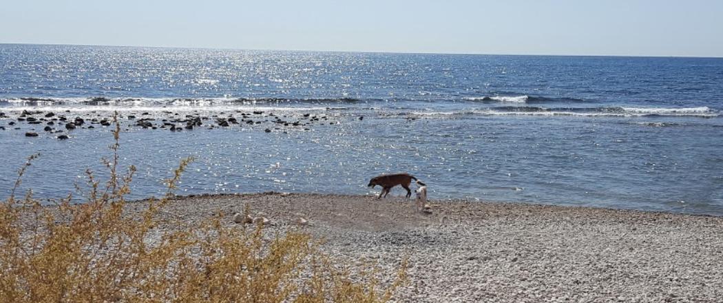 Panorámica de la Playa Punta del Riu Sec