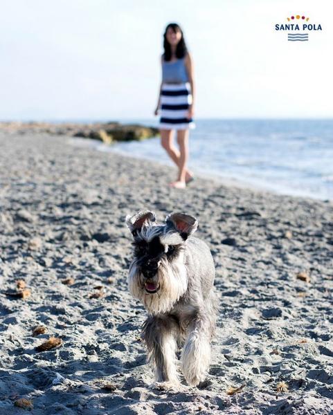 Perro paseando por la Playa La Calete dels Gossets