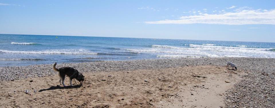 Playa canina L'Estany