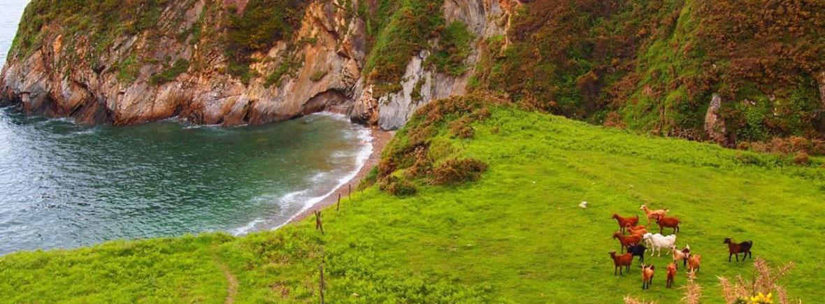 Cala Salencia - Playa para perreos - Playa canina
