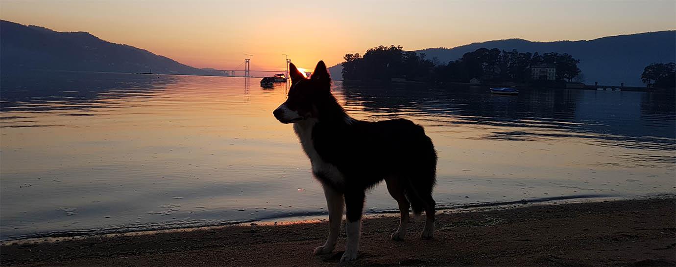 Playa Cesantes - Plyas para perros en Pontevedra - Galicia - Redondela